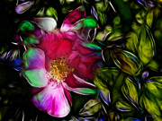 Stuart Turnbull Metal Prints - Wild rose - Colors Metal Print by Stuart Turnbull