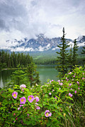 Blooming Bushes Prints - Wild roses and mountain lake in Jasper National Park Print by Elena Elisseeva
