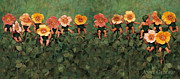 Wild Photo Metal Prints - Wild Roses Metal Print by Anne Geddes