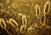 Agricultural Photos - Wild Spikes by Carlos Caetano