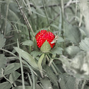 Grow Digital Art - Wild Strawberry by Ashley Miller