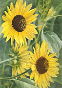 Sunflower Painting Metal Prints - Wild Sunflowers Metal Print by Sharon Freeman