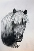 Pet Pony Drawings Framed Prints - Wild Thing Framed Print by Carolyn Valcourt