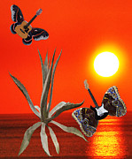Lepidopterans - Wild Thing Rocks by Eric Kempson