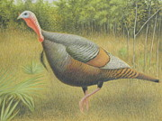 Wildlife Landscape Drawings - Wild Turkey by Alan Suliber