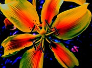 Digitally Altered Floral Posters - Wild Yellow Lily Poster by Beth Akerman