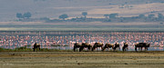Flamingo Prints - Wildebeest and Flamingos Print by Joe Bonita