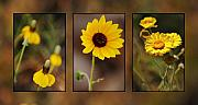 Earth Tone Framed Prints - Wildflower 3 Framed Print by Jill Reger