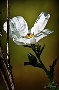 Christopher Holmes - Wildflower
