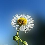 Botanica Photos - Wildflower In The Wind 209 by David Houston