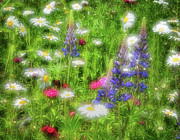 White Colors Posters - Wildflower Meadow - Abstract Impressions Poster by Thomas Schoeller