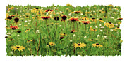 Jq Licensing Metal Prints - Wildflower Meadow Metal Print by JQ Licensing
