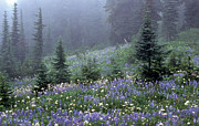 Evergreen Trees Posters - Wildflower Meadow Mt Rainier Poster by Tom and Pat Cory