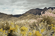 Desert Photography Posters - Wildflower Mountain Poster by Andrea Hazel Ihlefeld