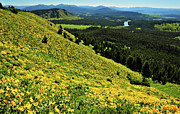 Wildflower Mountain In Wyoming Print by Jeff R Clow