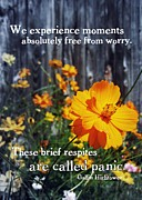 Petal Photos - WILDFLOWER quote by JAMART Photography