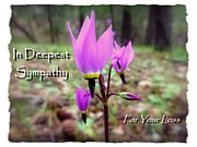 Condolences Posters - Wildflower Sympathy Card Poster by Cindy Wright