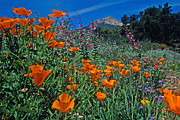 Landscape Framed Prints Framed Prints - Wildflower Wonderland Framed Print by Kathy Yates