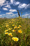 Yellow Flowers Prints - Wildflowers and Barbed Wire Print by Peter Tellone
