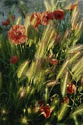 Pods Framed Prints - Wildflowers And Grass Tufts In Provence Framed Print by Nicole Duplaix