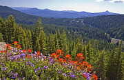 Crater Lake View Framed Prints - Wildflowers and Mountaintop View Framed Print by Ellen Thane and Photo Researchers