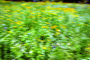 Signed Photo Prints - Wildflowers and Wind 2 Print by Skip Nall