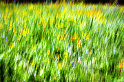 Signed Photo Prints - Wildflowers and Wind Print by Skip Nall