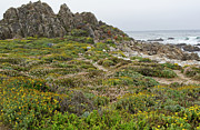 Wildflowers At China Rock - Pebble Beach - California Print by Brendan Reals