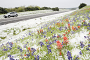 Snow Covered Street Framed Prints - Wildflowers Blanketed by Late Spring Snowfall Framed Print by Jeremy Woodhouse