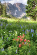 Alta Framed Prints - Wildflowers in Albion Basin Utah Framed Print by Utah Images