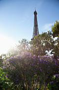 Wildflower Photography Framed Prints - Wildflowers In Front Of The Eiffel Tower Framed Print by Paul Hudson