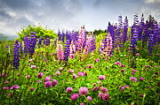 Flower Blooms Photos - Wildflowers in Newfoundland by Elena Elisseeva
