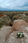 Badlands Posters - Wildflowers in the Badlands Poster by Jill Battaglia