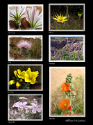 Judee Stalmack Framed Prints - Wildflowers of the Southwest Framed Print by Judee Stalmack