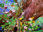 Aster  Originals - Wildflowers on a Cypress Knee by Barbara Bowen