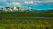 Seasons Photos - Wildflowers Touch the Mountains by Don Schwartz