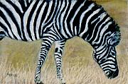 Zebra Pastels - Wildgrasses by Jan Amiss