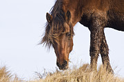 Wild Horse Prints - Wildhorse on the High Dunes Print by Bob Decker