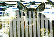 Picket Fences Photos - Wildlife Fading Behind Picket Fences by Lenore Senior and Dawn Senior-Trask