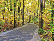 Wildwood Framed Prints - Wildwood Path in Fall Framed Print by Jack Schultz
