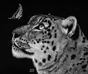 Wildlife Drawings - Will You Be My Friend by Sheryl Unwin