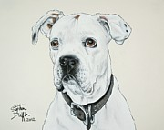 Boxer  Pastels Prints - Will you Love me... Print by Stephen Duffin