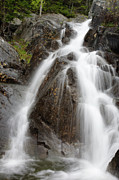 White Mountains New Hampshire Posters - Willey Brook Falls - White Mountains New Hampshire USA Poster by Erin Paul Donovan