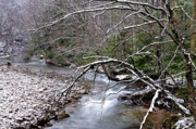 Williams Photos - Williams River in Winter by Thomas R Fletcher