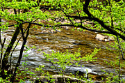 Williams Photos - Williams River Spring Green by Thomas R Fletcher