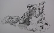 Border Collie Drawing Posters - Willow and frisbee Poster by Ramona Kraemer-Dobson