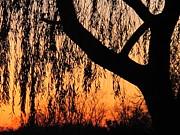 Willow At Sunset Print by Valia Bradshaw