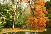 Furnas Prints - Willow in Autumn colors Print by Gaspar Avila