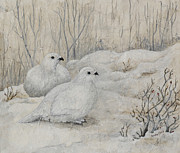Fauna Mixed Media Metal Prints - Willow Ptarmigans Metal Print by Sandy Clift