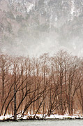 National Park Photography Prints - Willow Trees In Winter At Kamikochi Print by Skye Hohmann